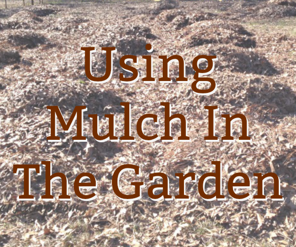 mulch in the garden