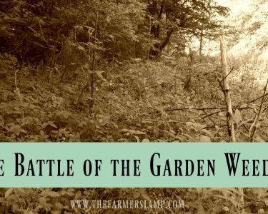 The Battle of The Garden Weeds