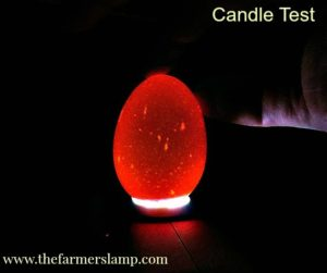 Candle Test for Egg Freshness
