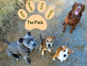 Our Dog Pack