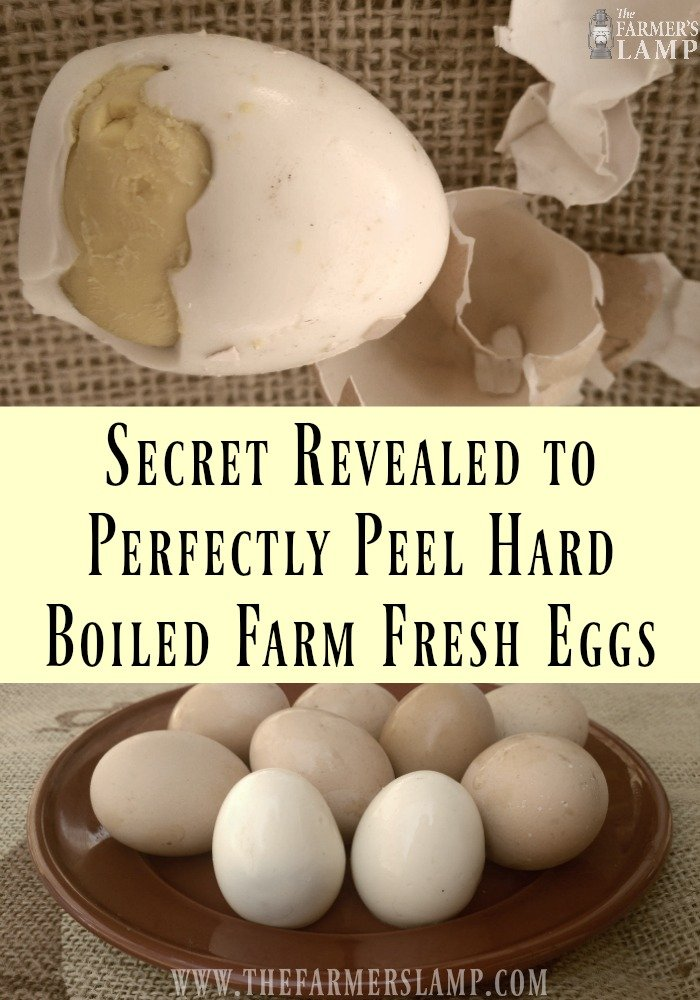 how-to-peel-farm-fresh-hard-boiled-eggs