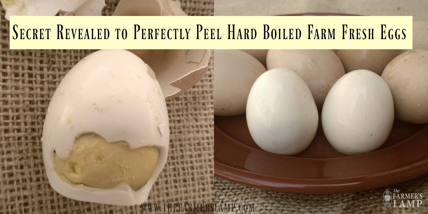 farm-fresh-hard-boiled-peeled-eggs