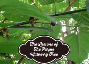 The Lesson of The Purple Mulberry Tree