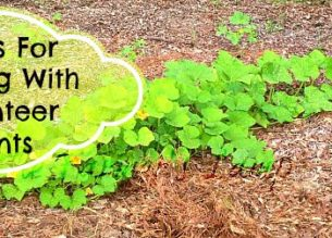 5 Tips For Volunteer Plants