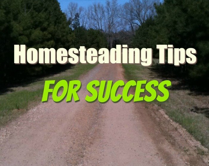 Homesteading Tips for success