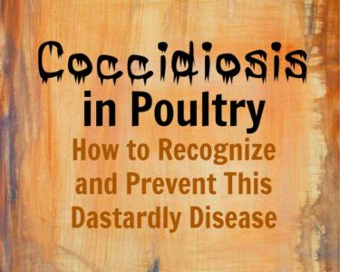 Coccidiosis in Poultry