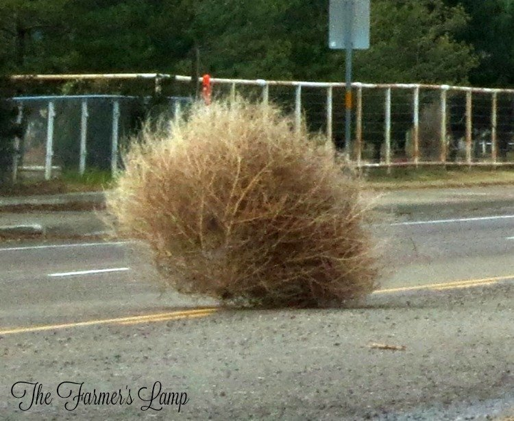 Tumbleweed! Everywhere!
