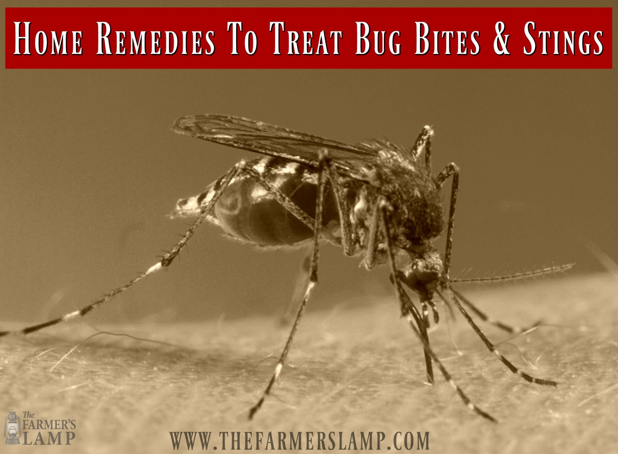 Home Remedies To Treat Bug Bites and Stings