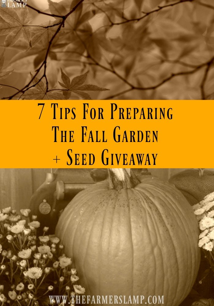 7 Tips For Preparing The Fall Garden + Seed Giveaway tall