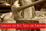 trees-for-firewood- best- wood-for-fires-fireplace-heating-with-wood