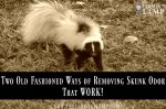 skunk-odor-remove-natural