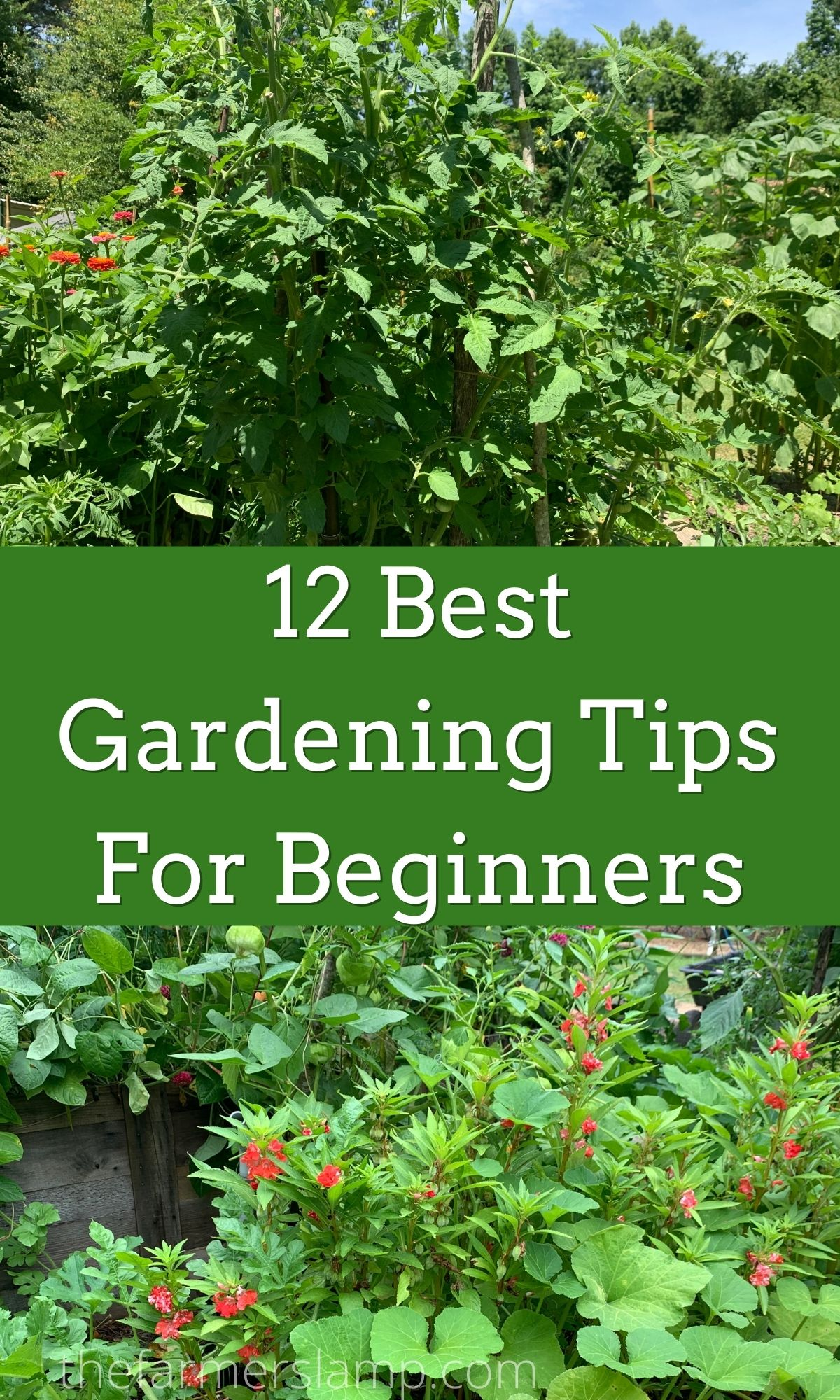 Vegetables growing in a garden for pinterest pin